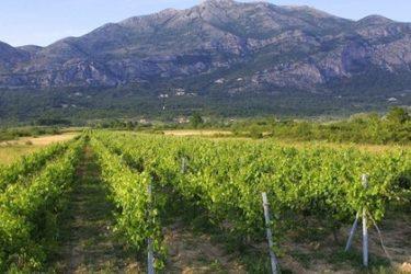 Билећка трилогија: У Конавле по вино