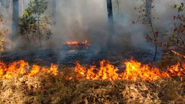 Пожар у Требињској шуми