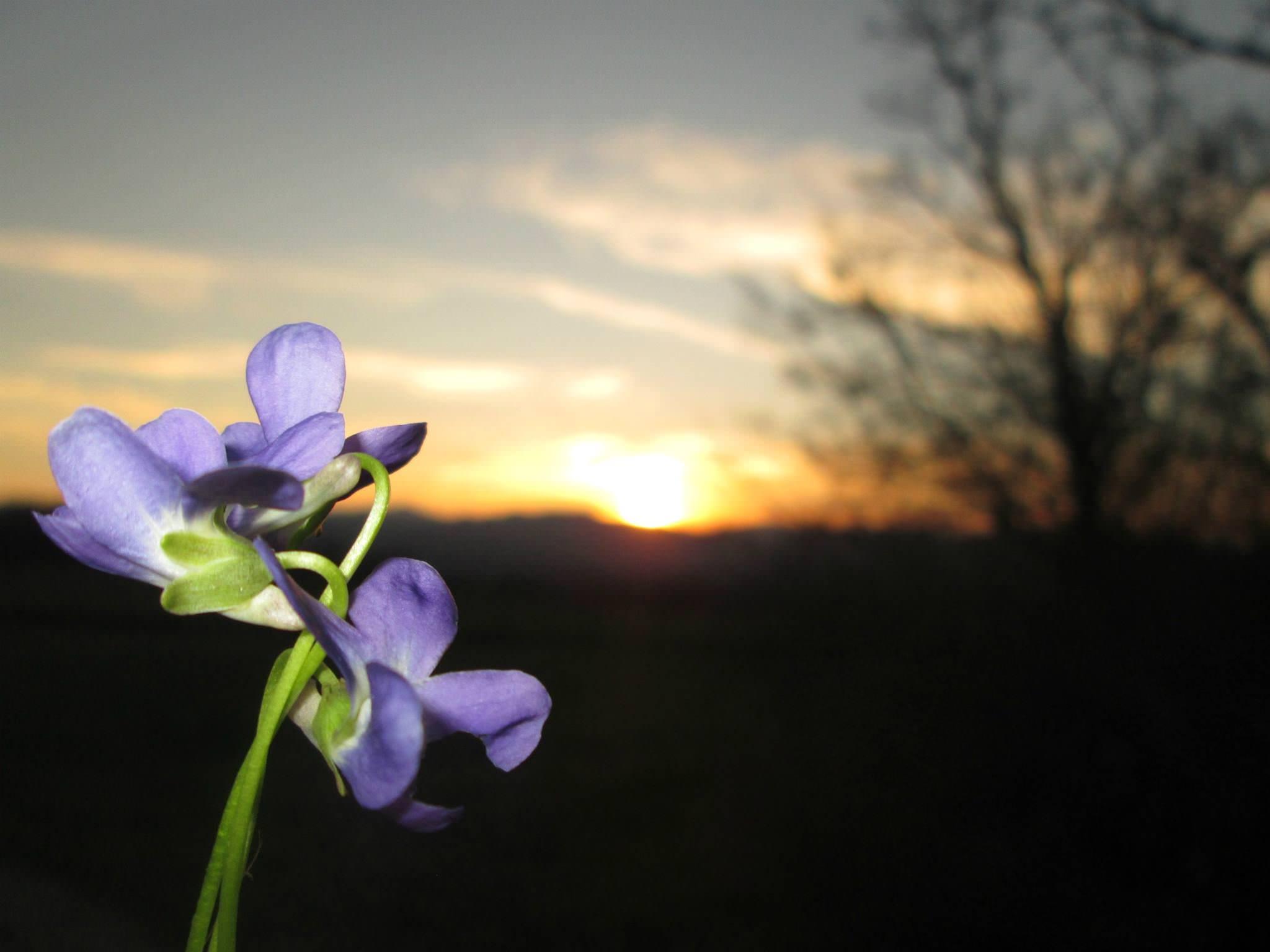 Прољећни поздрав Сунцу (фото: Јелена Радмиловић)