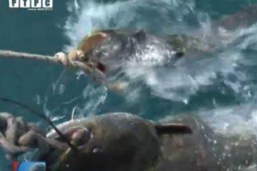 Somovijada na Bilećkom jezeru (VIDEO)