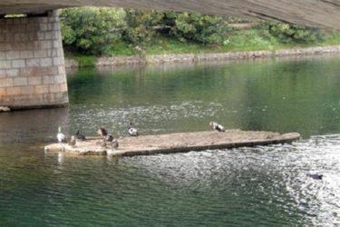 Азил за патке на Требишњици