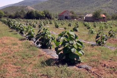 Дрво будућности засађено у Берковићима