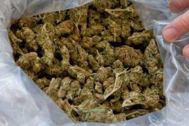 Копривица признао шверц марихуане