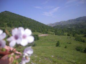 planina 003