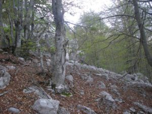 planina 045