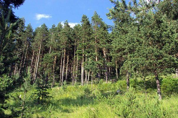Напао шумара у Невесињу