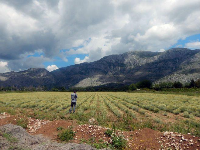 ПОВРАТАК КОРИЈЕНИМА: Кустурица ће градити дестилерију у Билећи