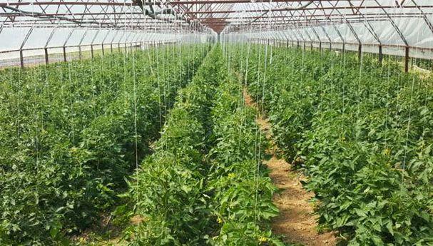 Требиње основало посебан аграрни фонд (ВИДЕО)