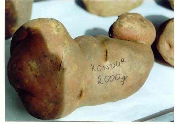 Општина Невесиње покренуће процес брендирања кромпира