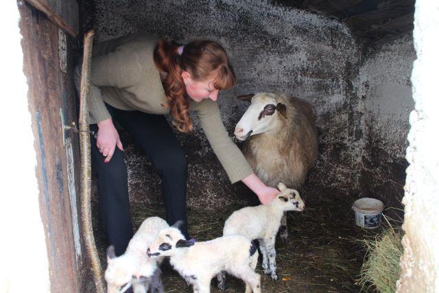 У гатачком селу Вратковићи овца ојагњила четворо
