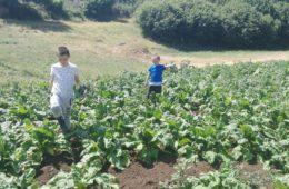 ЗАЉУБИЛИ СЕ У ХЕРЦЕГОВИНУ: Београђани Урош (10) и Вук (6) отишли у село код Требиња на један дан, а сад родитељи не знају како да их врате!