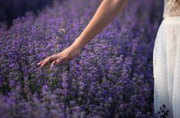 ОТКРИЈТЕ БЛАГО ХЕРЦЕГОВИНЕ: Узмите најбоље од онога што природа даје